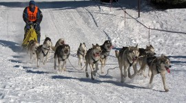 Dog Sledding Photo Free