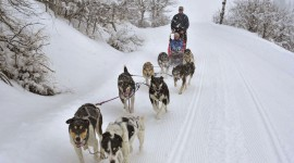 Dog Sledding Photo Free#1