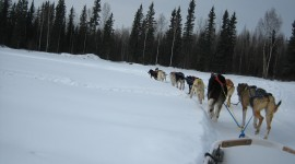 Dog Sledding Photo#1