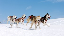 Dog Sledding Wallpaper 1080p