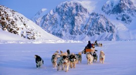 Dog Sledding Wallpaper For Desktop