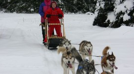 Dog Sledding Wallpaper For IPhone