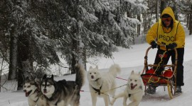Dog Sledding Wallpaper For IPhone Free