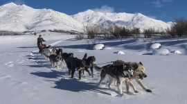 Dog Sledding Wallpaper For PC