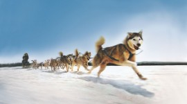 Dog Sledding Wallpaper Free