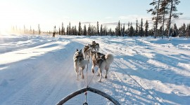 Dog Sledding Wallpaper Full HD