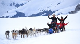 Dog Sledding Wallpaper Gallery