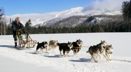 Dog Sledding Wallpaper HQ