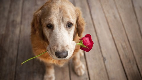 Dogs With Flowers wallpapers high quality