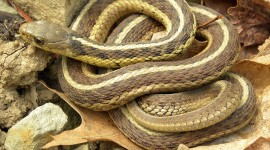 Grass Snake Wallpaper Gallery