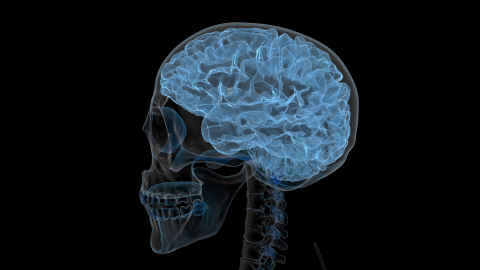 Head X-Ray wallpapers high quality