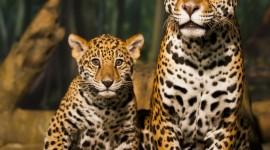 Jaguar Animal Wallpaper For Mobile
