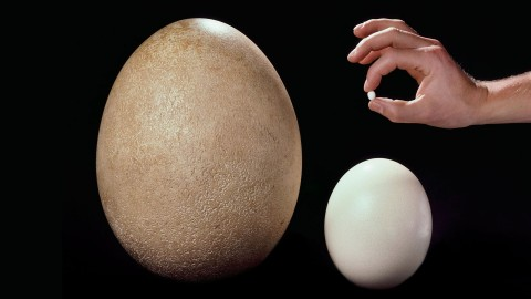 Ostrich Eggs wallpapers high quality