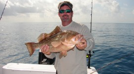 Red Grouper High Quality Wallpaper