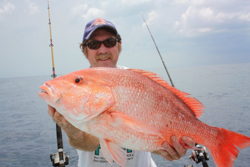 Red Grouper wallpapers HD