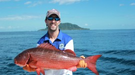 Red Grouper Wallpaper Gallery