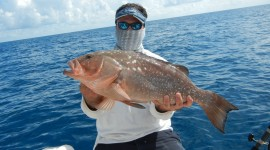 Red Grouper Wallpaper High Definition