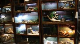 Shop Exotic Animals Wallpaper Full HD