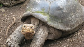 The Oldest Turtles Wallpaper Gallery