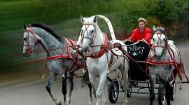 Three Horses Desktop Wallpaper