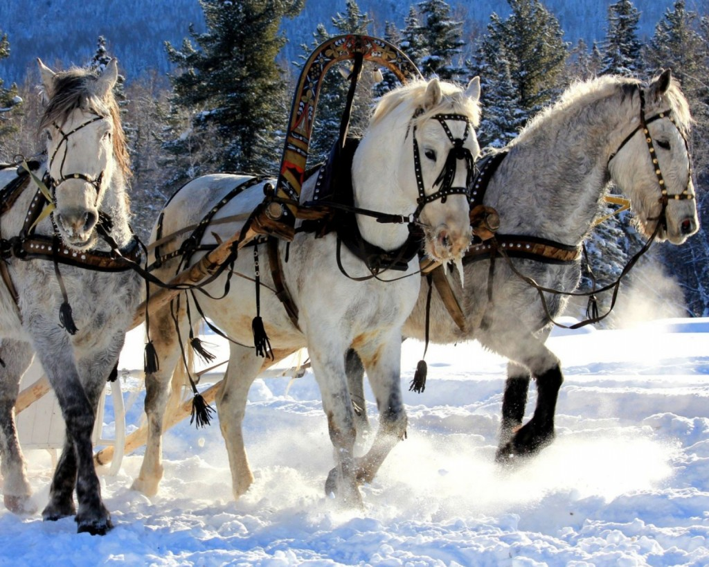 Three Horses wallpapers HD