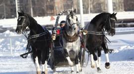 Three Horses Photo