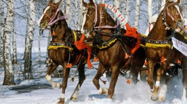 Three Horses Photo Download