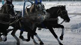 Three Horses Photo Free