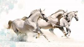 Three Horses Wallpaper 1080p