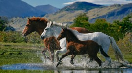 Three Horses Wallpaper For PC