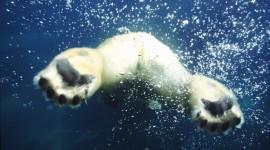 Bears Swimming Wallpaper Full HD