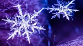 Beautiful Snowflakes Desktop Wallpaper