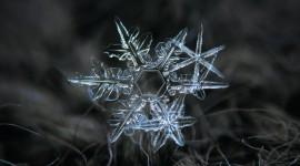 Beautiful Snowflakes Photo Free