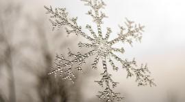 Beautiful Snowflakes Wallpaper