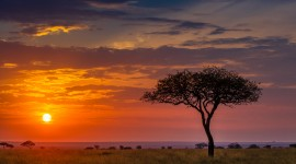 Dawn In Africa High Quality Wallpaper