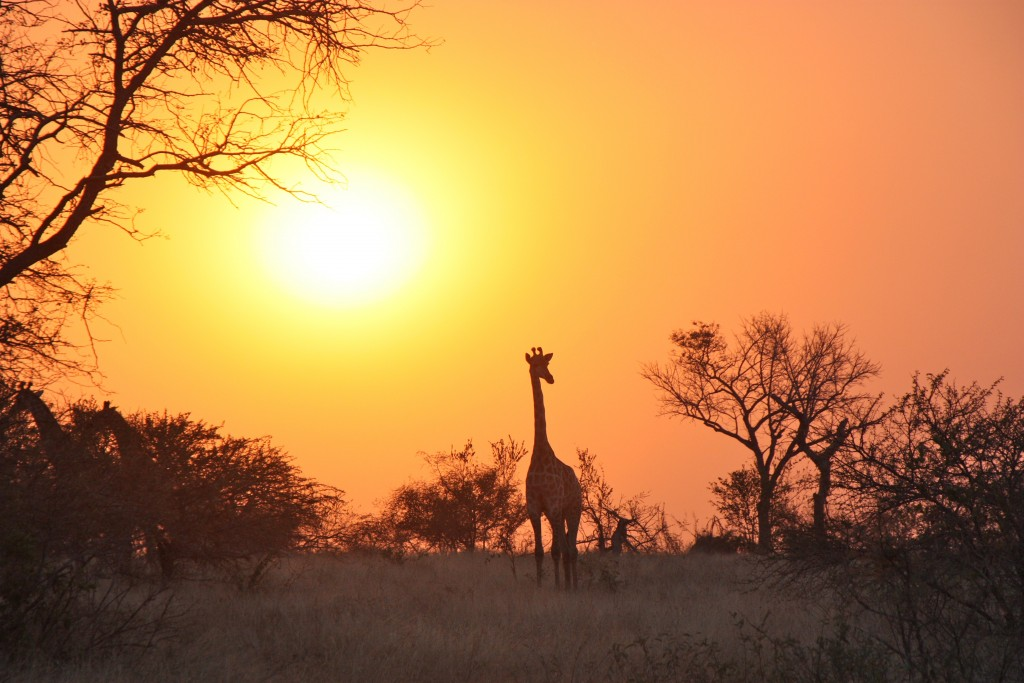 Dawn In Africa wallpapers HD