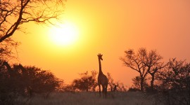Dawn In Africa Wallpaper Background