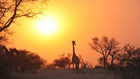 Dawn In Africa wallpapers high quality