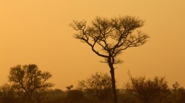 Dawn In Africa Wallpaper Download Free