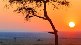 Dawn In Africa Wallpaper For IPhone Free