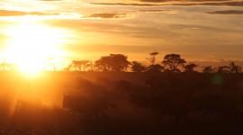Dawn In Africa Wallpaper HQ
