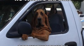 Dog Driver Image