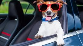 Dog Driver Photo