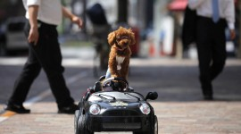 Dog Driver Photo Download