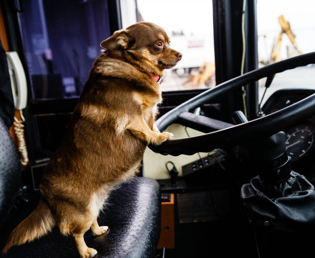 Dog Driver wallpapers HD
