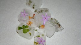 Flower Ice Image