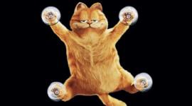 Funny Pictures Desktop Wallpaper HD