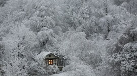 House In Winter Forest Photo Free#1