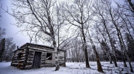 House In Winter Forest Photo#1