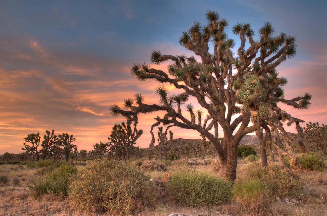 Joshua tree wallpapers high quality download free - Joshua tree wallpaper ...